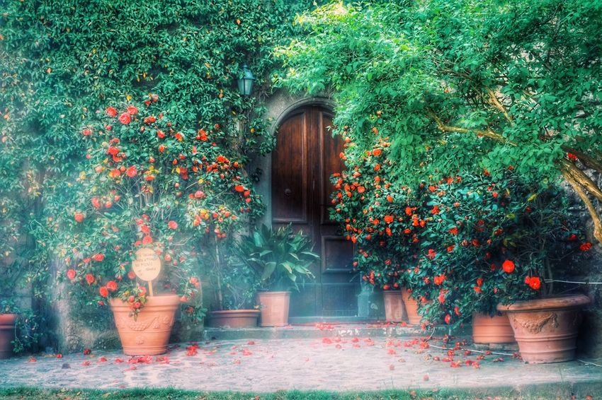 EyeEmNewHere Nature Landscape Romantic Illusion Magic Green Nature No People Italian Style Orvieto, Italy Streetphotography Colors Of Nature EyeEmNewHere