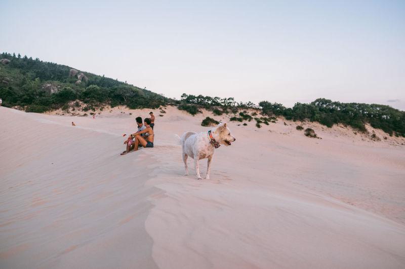 Beauty In Nature Brasil Clear Sky Day Desert Dog Domestic Animals Dunes Florianópolis Full Length Mammal Men Nature One Person Outdoors People Sand Sand Dune Sky Sun Sunlight Sunset Tree
