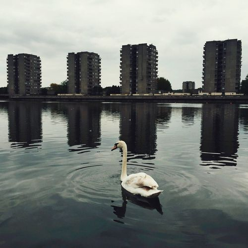 Thamesmead, London. Where Clockwork Orange and Misfits were shot Swan Lake Urban Thamesmead Misfits Suburban Suburban Landscape Suburban Nature First Eyeem Photo