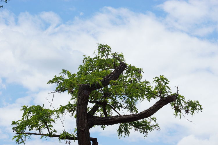 Tree Sky Cloud - Sky Nature Blue Social Issues Day Outdoors Animal Wildlife Leaf Branch Low Angle View Beauty In Nature No People Tree Area Bird EyeEm Best Shots EyeEm Nature Lover Tree No Filter, No Edit, Just Photography Freshness Backgrounds Trees And Leaves Green Color Clear Sky