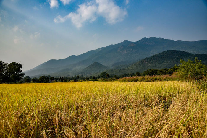 Colour in the Nature Tree Mountain Rural Scene Flower Agriculture Yellow Field Cereal Plant Sky Landscape Cultivated Land Plantation Farm Agricultural Field Rice Paddy Plowed Field Patchwork Landscape Farmland
