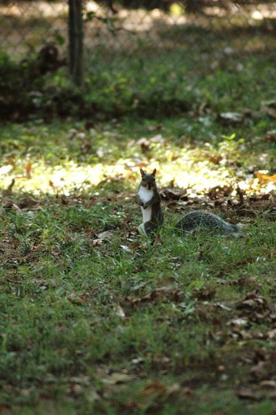 Nikon D70 Furry Nuts Who Me? One Animal Animal Themes Grass Animals In The Wild Squirrel Outdoors