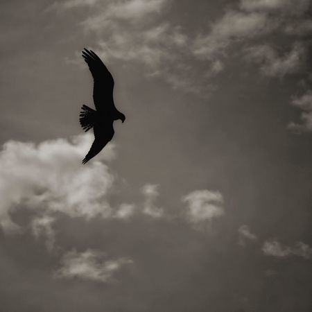 he hunt. Hawk Flying Flying High Bird Bird Photography Birdwatching The Great Outdoors - 2015 EyeEm Awards