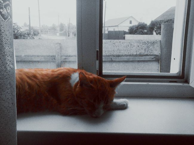 Cat Lovepet