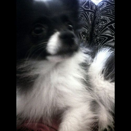Mybella Dog Puppy Love
