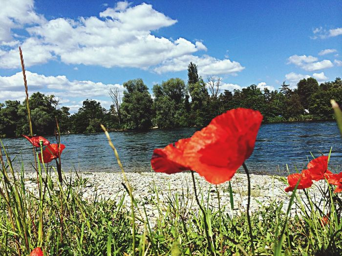 Riverside Rhein