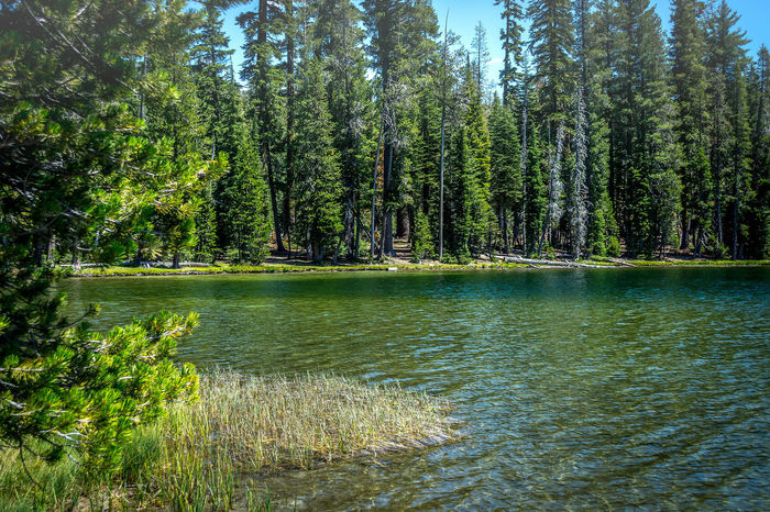"""""""Summit Lake of Lassen National Park""""- Beauty In Nature Fishing Forest High Mountain Treking Lake Lakeshore Lassen National Park Lush Foliage Mount Lassen Outdoors Pond Reflection Relaxing Moments Remote River Riverbank Standing Water Summit Tranquil Scene Tranquility Tree Tropical Climate Water Waterfront"""