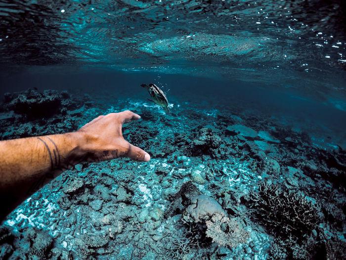 Cropped hand of man gesturing undersea