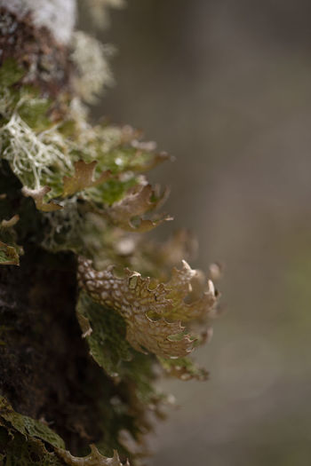 Close-up of plant on moss