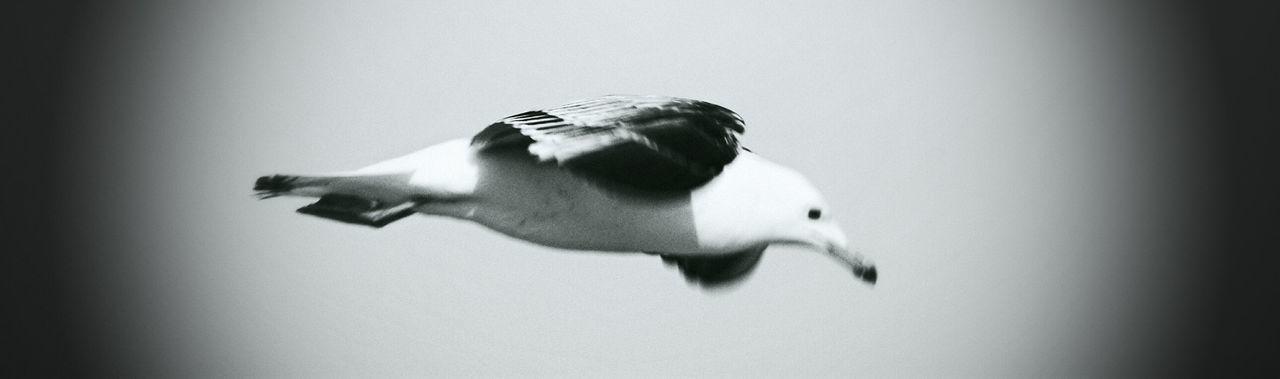 Bird Flight Urban Nature Black And White