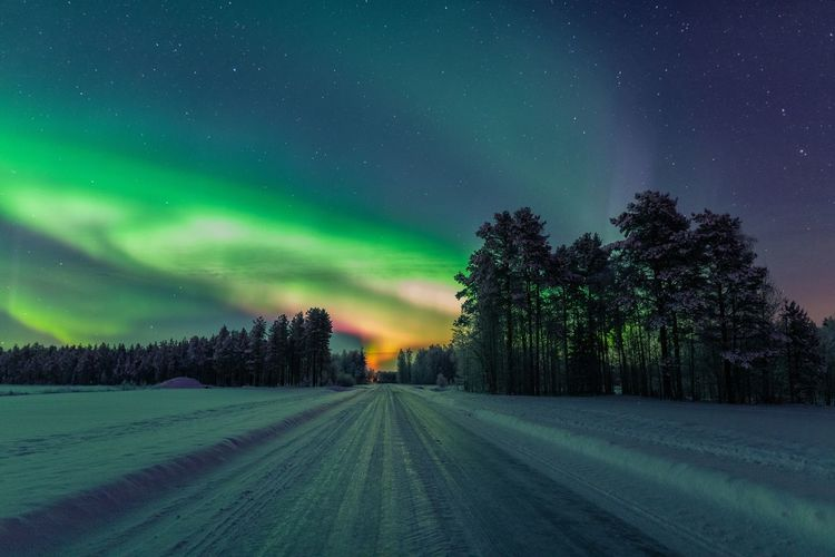 Aurora explosion! I've never seen so many colors in Northern Lights Beauty In Nature Sky Night Astronomy Snow Winter Tranquil Scene Tranquility No People Star - Space Nature Outdoors Aurora Borealis Northern Lights Lapland Scenics Arctic Power In Nature Landscape Nature Photography Photography Travel EyeEm Nature Lover Road Taking Photos