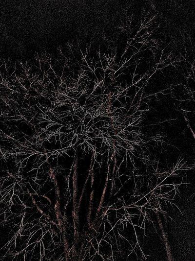 Nightphotography Tree Night