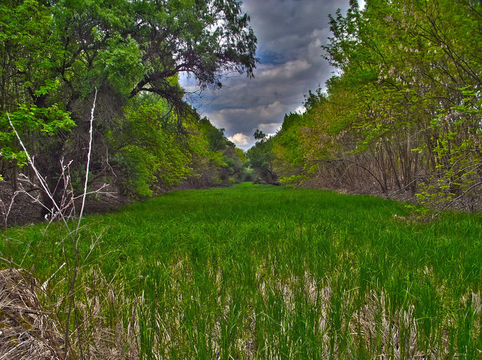 Forest HDR Hungary Nature Nature's Strength Plains Riverbed Spring first First Eyeem Photo