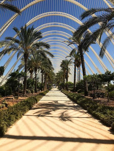 """Almost """"Secret Garden"""" Palm Tree Day Tree Growth Outdoors Nature Sky Garden City Of Arts And Sciences Of Valencia, Spain"""