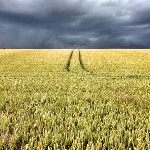 Wolds IPhone Snapseed Nature East Yorkshire Landscape Farming Crops Sky Showcase: November Iphonephotoacademy IPhoneography IPSWeather IPS2016Composition