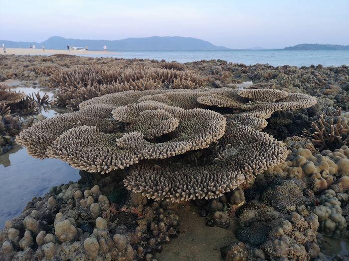 snorkeling Sea