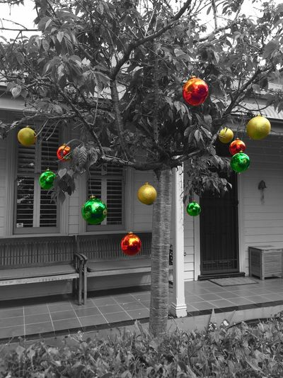Christmas Trees Colorsplash IPhoneography