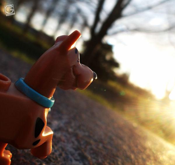 Scooby-dooby-doo! #Lego #scoobydoo #toyphotography
