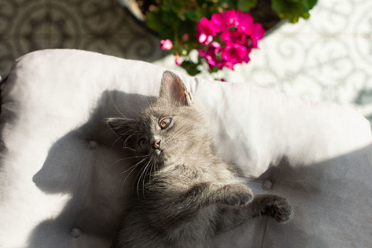 Cat resting on a flower