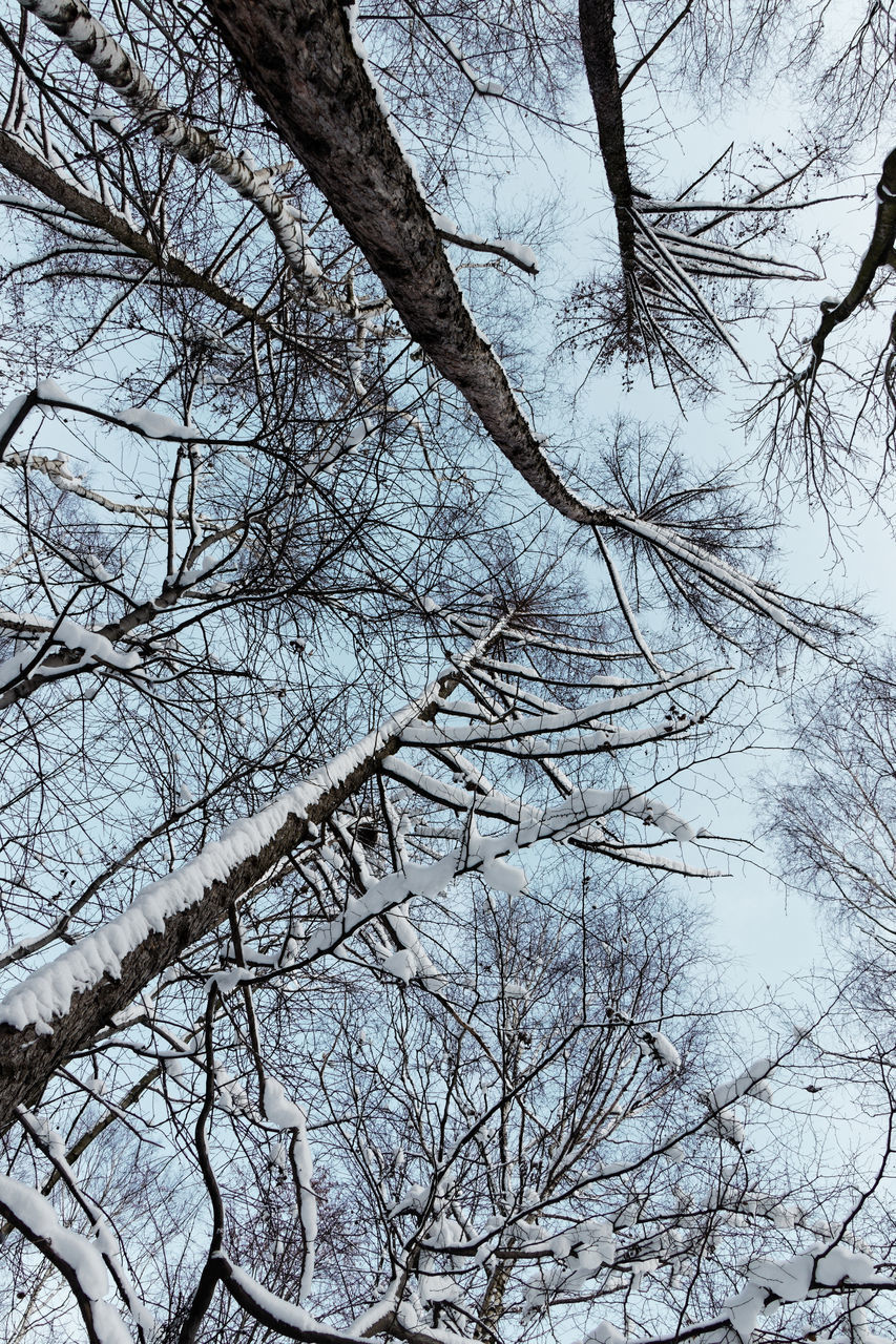 LOW ANGLE VIEW OF BARE TREES AGAINST SKY DURING WINTER