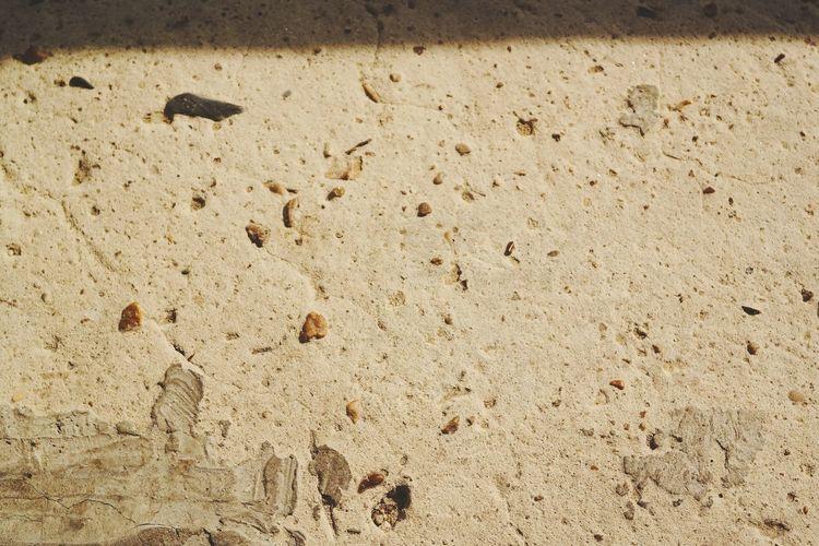 High angle view of animal on sand
