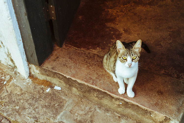 Animal Themes Cat Domestic Animals Domestic Cat Door Entrance Feline Feline Portraits High Angle View No People One Animal Pets Portrait Sitting Pet Portraits