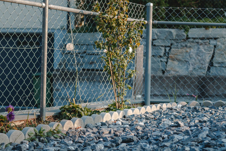 Plants growing by chainlink fence