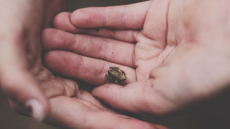 High angle view of young frog on hand