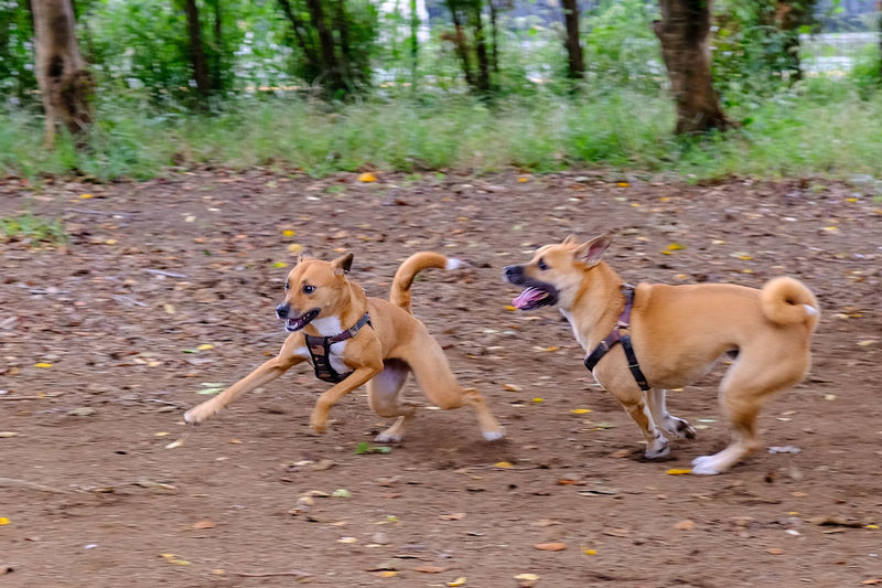 Dogs running in a forest