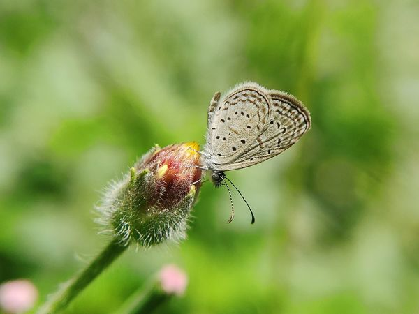 Butterfly Insect Insect Photography Insects Collection Insectlicious Butterfly Nature_collection Naturelovers Nature Photography Insect Photography Flower Insect Perching Close-up Animal Themes Plant Butterfly - Insect Green Background
