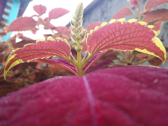 Nice Day Phone Picture Plant Leaf Nature Fragility Close-up Flower Beauty In Nature Outdoors Day Flower Head No People Pink Color Freshness The Graphic City Love Yourself Mobility In Mega Cities