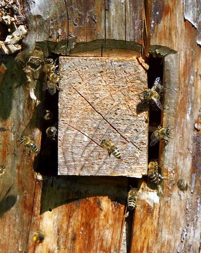 Bees Bee 🐝 Animal Beeyard Close-up Group Of Animals Hive Insect Nature No People Wood - Material