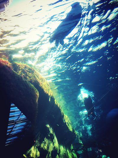 SeaOtter Habitat Aquarium