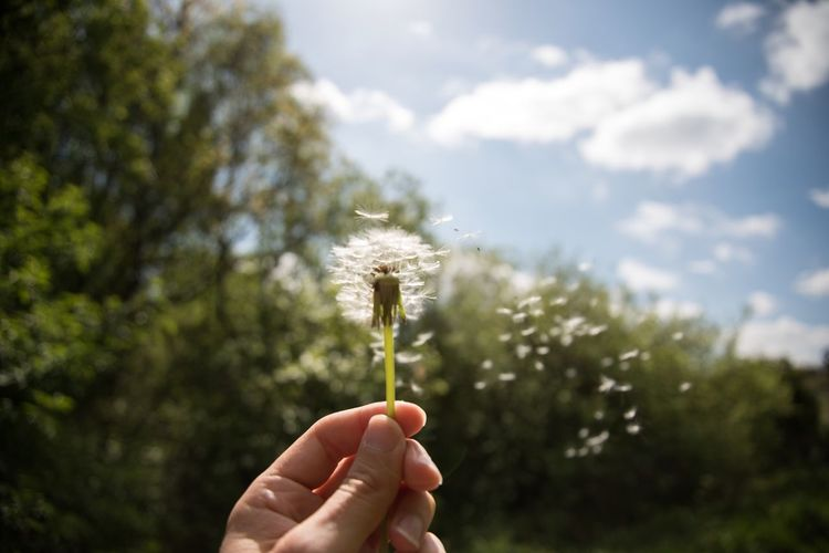 Human Hand Holding Dandelion Nature Focus On Foreground Human Body Part One Person Flower Outdoors Plant Field Fragility Growth Close-up Sky Real People Beauty In Nature Day Freshness Hope Nikond750