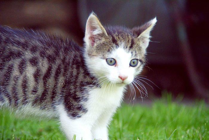 discover life Pets Feline Kitten Outdoors Discovering Entdecken Katzenliebe Katzenbaby Neugierig Neugier  Babykater Katzenwelpe