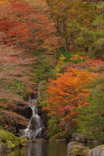 古峯園 秋の風景 紅葉 秋