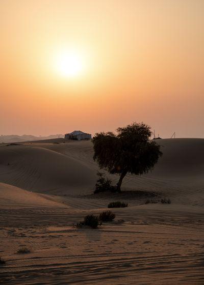Sunset Climate Arid Climate Outdoors Orange Color Sun Sand Dune Sand Desert Tree Land Landscape Plant Tent
