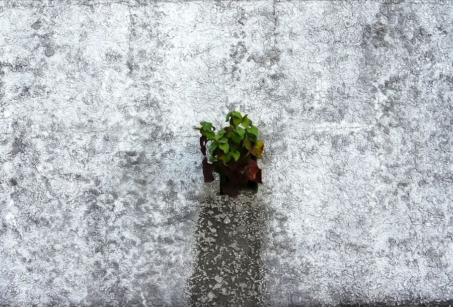 The Week On EyeEm Japan Photography No People Beauty In Nature Abstract Wall Textures Wall White Paint Decay Fragility Leaf Day Outdoors Flower Plant Growth Nature Freshness Beauty In Nature Blooming Flower Head Close-up Investing In Quality Of Life
