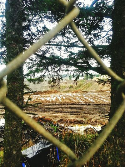 Day Portland Oregon Usa Scenics Outdoors Rock Quarry Looking Through A Fence Tree Landscape Field
