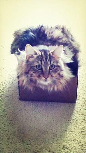 Cat In Box Dreamer love him