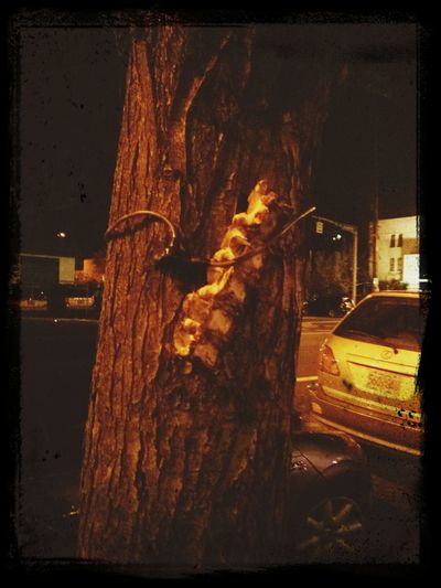 meat chained to a tree because Portland