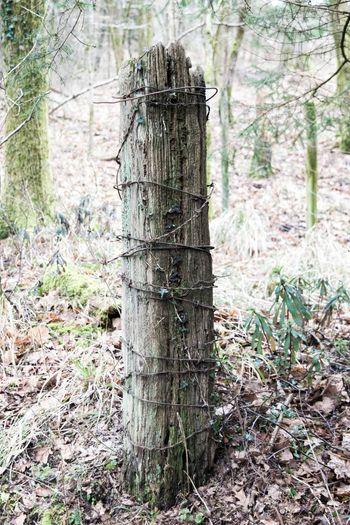 Wooden Wooden Fence Post Postwooden Woodenpost