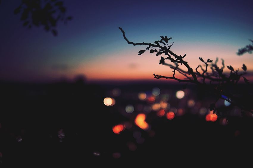When you climb on a high mountain on the edge of the city, you can focus on other things and put the big city life in the blurry background. Sunset Sky City City Life Outdoors Nature Berry Tree Citylights Jena Jenzig Colour No People Forget Blue Blurry Blurred Blurred Background
