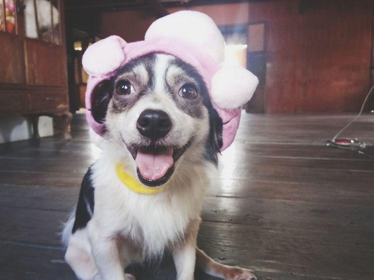 🐕 🐦 🌳 ☺ Dog Love Happy 🐶🐶🐶🐶🐶🐶☀😁