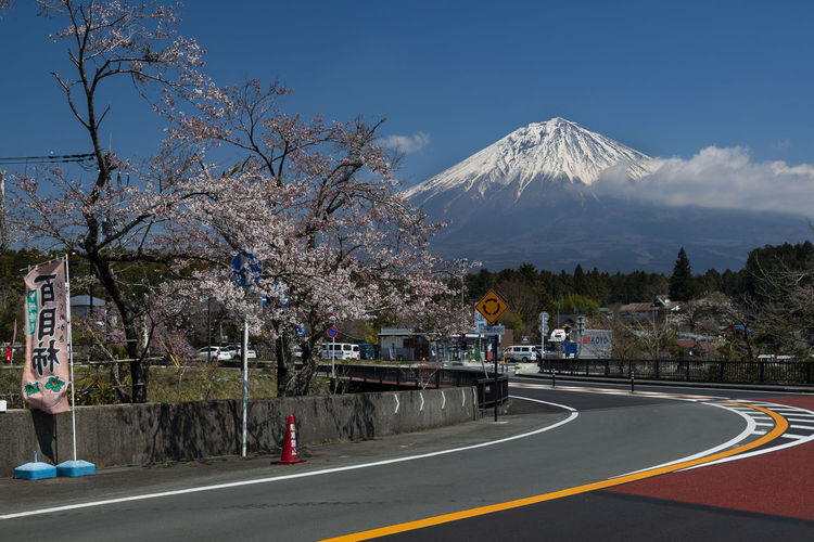 Mount Fuji and Cherry Blossom, Japan Yamanashi White Water Volcano View Vacation Travel Transportation Traffic Town Tourist Attractions Tourism Spring Snow Cap Snow Sky Season  Scenic Scenery Scene Road Pink Peak Park Outdoor No People Nature Natural Mt Fuji Mountains Mountain Mount Landscape Landmark Japanese  Japan Holiday Grass Fuji Fresh Flowers Destinations Day Cherry Blossom Blue Beauty Beautiful Background ASIA Tree