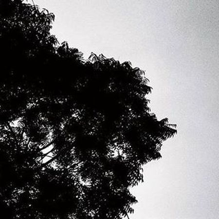 Tree Blackandwhite Follow Followme Awesomeness Heavywind Lightupthesky Bestoftheday Instagood Inst Instamood