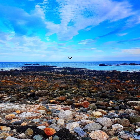 Sea Nature Water Sky Horizon Over Water Beauty In Nature Beach Tranquil Scene Pebble Tranquility Scenics Cloud - Sky Outdoors Day No People Blue Pebble Beach Animal Themes Bird