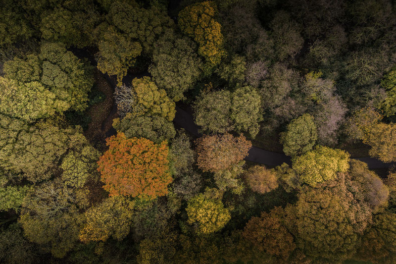Above the canopy - Autumn colour Aerial Shot Autumn Autumn Leaves Drone  Drone Shot Fall Beauty Fall Colors Trees Above The Trees Aerial View Backgrounds Colours Of Nature Fall Forest Full Frame Nature No People Woods