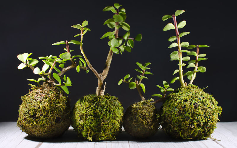 Close-up of fresh green plants against black background