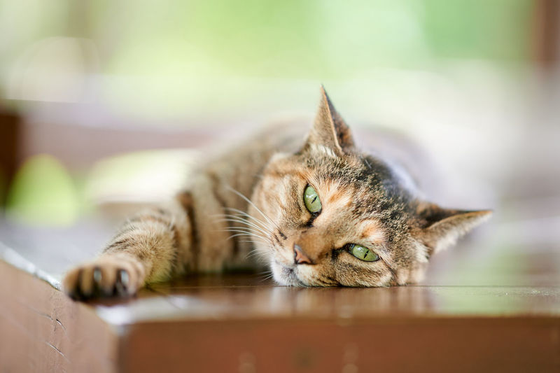 Cat lying down on wooden bench